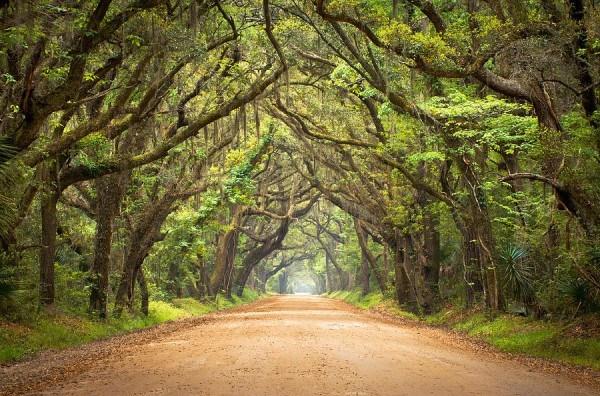 charleston-sc-edisto-island--botany-bay-road-dave-allen